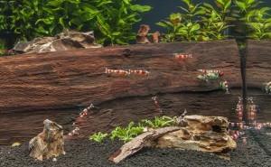 エビの色揚げにモンモリロナイトが使われている理由は? イオン交換作用で水がキレイになる!