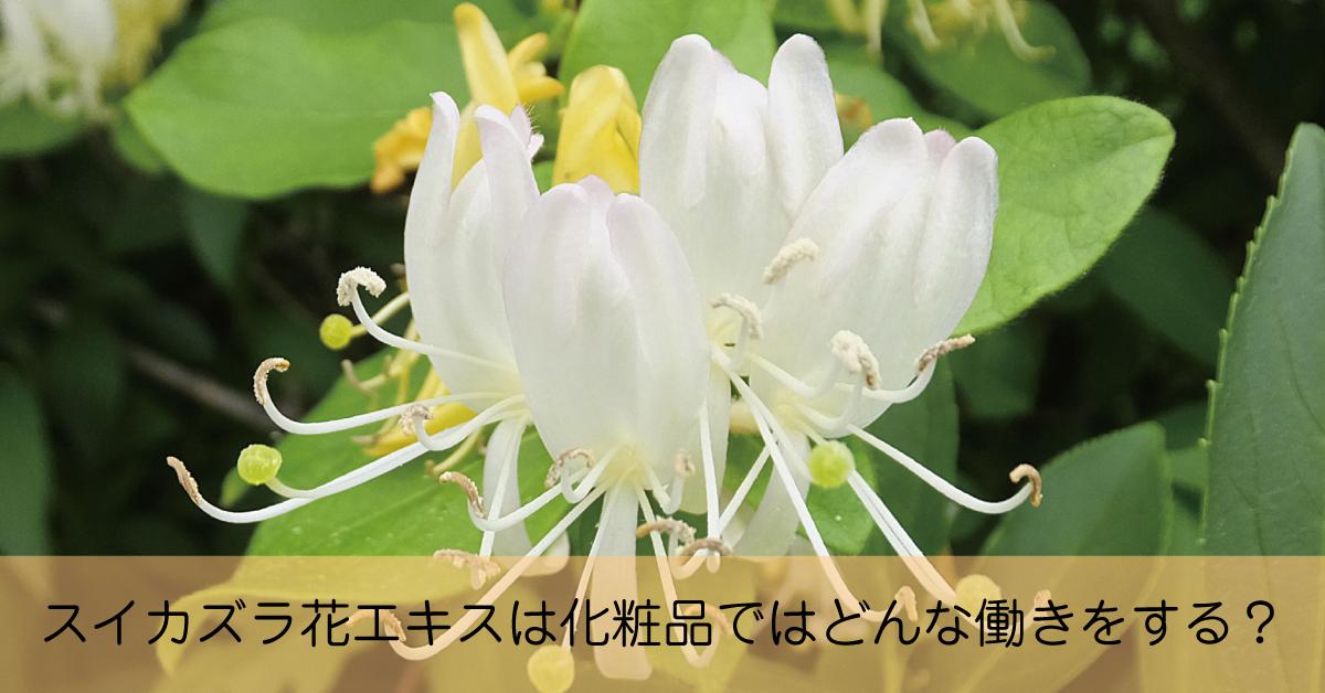 忍冬とも呼ばれ、漢方で使われるスイカズラ花エキスは化粧品ではどんな働き?