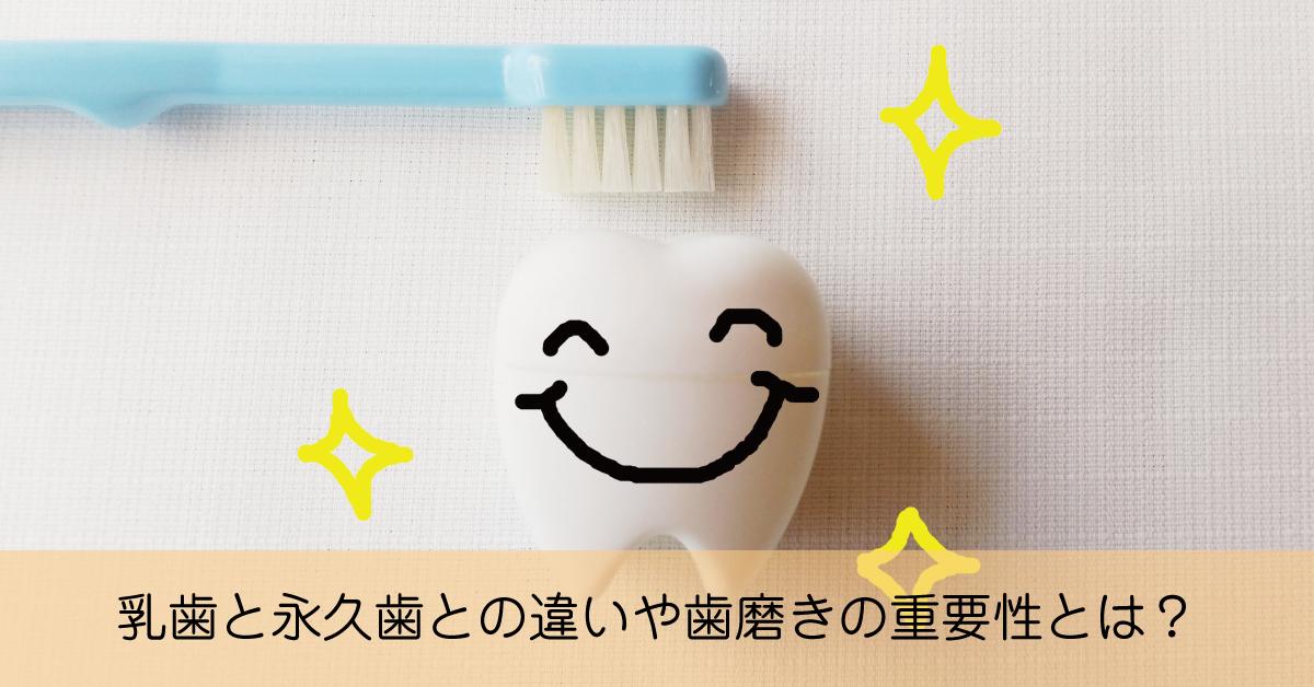むし歯になりやすい乳歯と永久歯の違いや歯磨きの重要性とは?