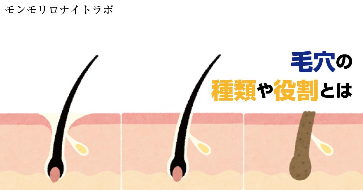 開きや黒ずみなどで目立つ毛穴とはどんなもの?その役割とは?